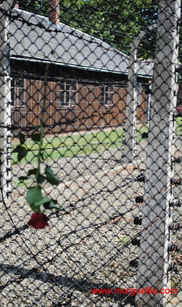Oltraggio al ricordo di Anne Frank